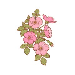 Vector floral branch of rose. Colorful pink flower with leaves and flowers drawing, design of cards, postcards, fabrics, Wallpaper, paper, clothing, embroidery, wedding invitations. Floral elements.