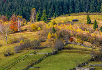 agricultural fields on hillside near forest. lovely autumnal scenery in mountains
