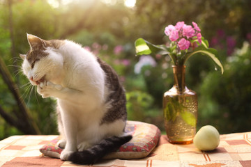 tom male beautiful cat with flox flowers in vase on green garden background close up photo