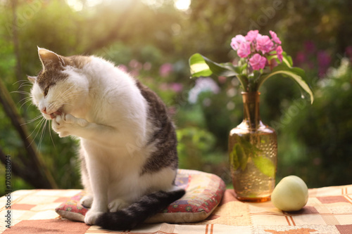 Tom Male Beautiful Cat With Flox Flowers In Vase On Green Garden