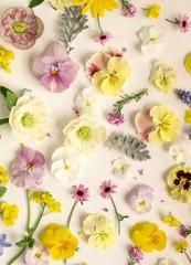 沢山の春の花の花びら、白背景