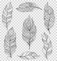 Set of black feathers