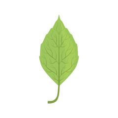 Elm tree green leaf vector Illustration