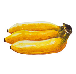 Peeled banana picture and painted with watercolor.