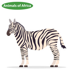 Zebra, zebra icon, African animals
