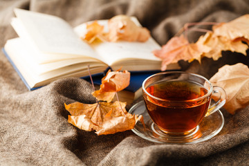 Tea cup on the fall with fallen leaves next to it