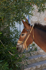 Sweet horse at Hydra island