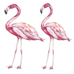Pink flamingo watercolor illustration isolated on white background.