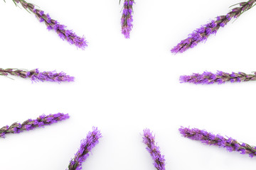 Violet liatris flowers on white background with round copy space in the center
