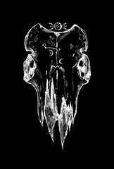 Beautiful goat skull without horns. Drawn by hand. Dark gothic illustration. It can be used for printing on t-shirts, postcards, or used as ideas for tattoos.