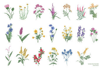Collection of beautiful wild herbs, herbaceous flowering plants, blooming flowers, shrubs and subshrubs isolated on white background. Hand drawn detailed botanical vector illustration. Fotoväggar