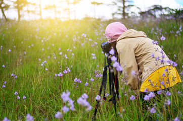 Female photographers are photographing purple flowers.