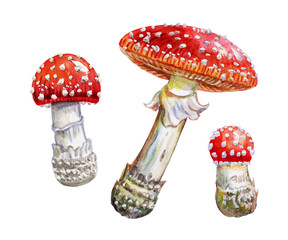 Set of red fly agarics, watercolor drawing on a white background with clipping path.