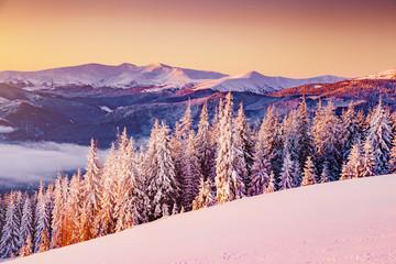 Majestic landscape glowing by sunlight in the morning. Location Carpathian, Ukraine, Europe.