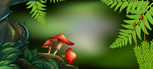 Background scene with mushrooms in forest