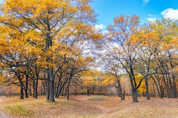 autumn oak forest