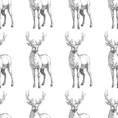 Vector seamless pattern with hand drawn forest deers. Background with wild animals in sketch style. Black and white texture