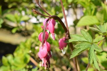 wunderschöne Blume im Garten