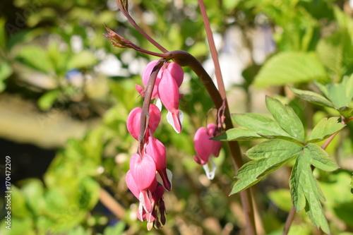 Wunderschöne Blume Im Garten Stock Photo And Royalty Free Images On