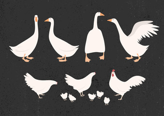 Vector illustration of chickens and geese
