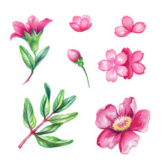 watercolor illustration, wild pink flower collection, floral design elements isolated on white background