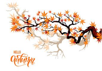 Autumn maple branches