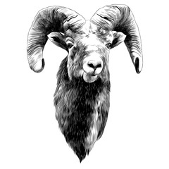 sheep sketch vector graphics monochrome black-and-white drawing head