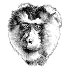 Photo sur Toile Croquis dessinés à la main des animaux monkey head sketch vector graphics black and white monochrome pattern