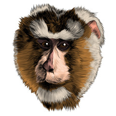 Photo sur Toile Croquis dessinés à la main des animaux monkey head sketch vector graphics color picture
