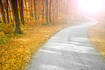 Wall Mural - Sunny bright red and gold colored autumn season forest with beautiful winding asphalt road.