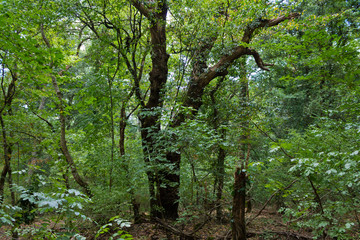 bosco del sasseto4