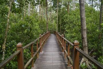 mangrove forest at Tanjung Piai, Johor, Malaysia