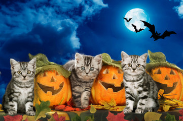Three kitten sitting on halloween pumpkins with dark sky and moon