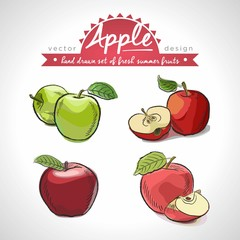 Apple. Hand drawn collection of vector sketch detailed fresh fruits.Isolated
