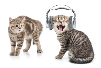 Papier Peint - funny cat in headphones listening music and another cat is shocked by this