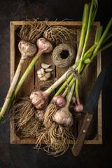 fresh organic garlic bulbs on wooden tray
