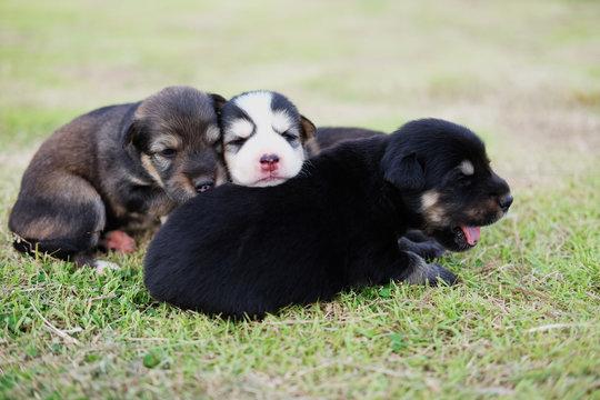 Newbron puppy dog.