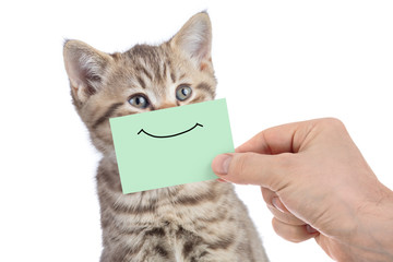 Papier Peint - funny happy young cat portrait with smile on green cardboard isolated on white