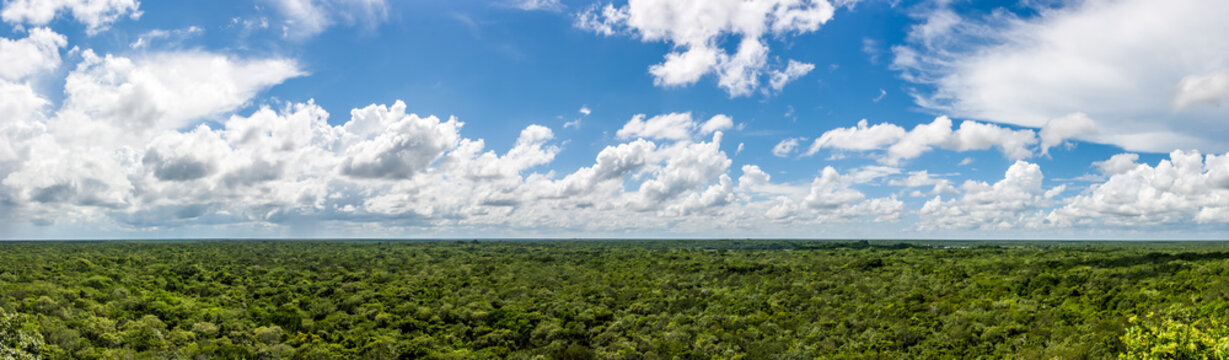Panorama from the top of the Cobà pyramid, Cobà archaeological site, Quintana Roo, Mexico.