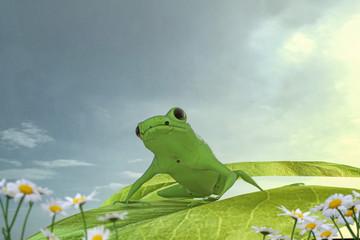 frog on a green leaf