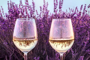 Two glasses of white wine in lavender field