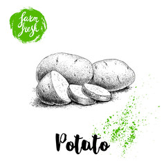Hand drawn sketch style illustration of ripe potatoes and slices. Farm fresh vector illustration poster.