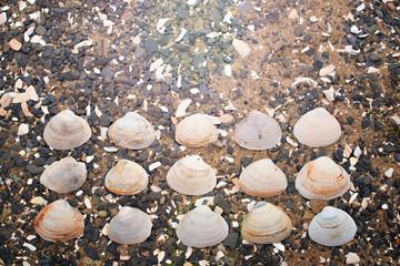 Seashells on a background sea pebbles.