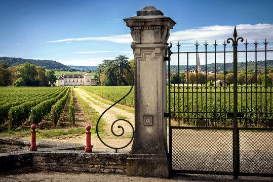Castle with vineyards, Burgundy, Montrachet.France