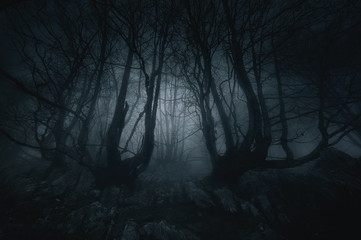 Aluminium Prints Forest nightmare forest with creepy trees