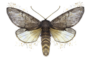 A watercolor drawing of a furry butterfly, a bear, a butterfly, a brown color, wings of light with spots on a white background for decor, prints