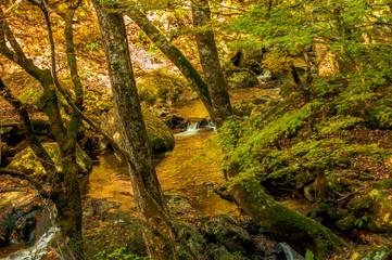 西日本の山・渓谷の黄葉、紅葉