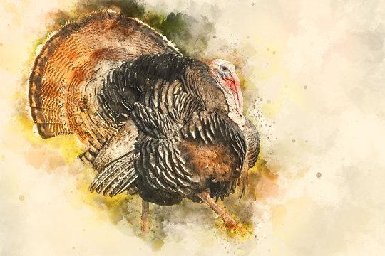Wild eastern turkey with copy space