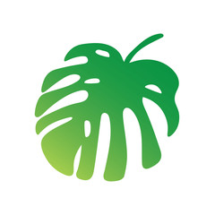 palm tree leaf, Monstera tropical plant- vector illustration