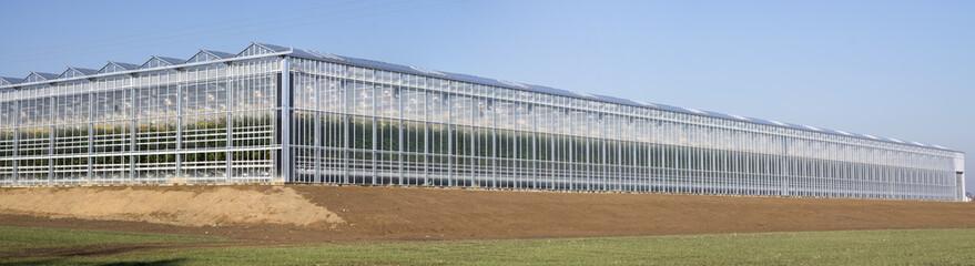 Fototapeta Agriculture tomato greenhouse obraz